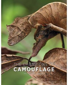 The Champions of Camouflage