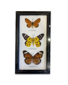 Framed Butterfly - 3 Assorted