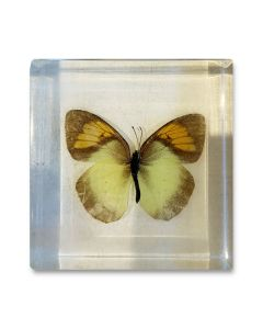 Butterfly Paperweight - Yellow and Orange