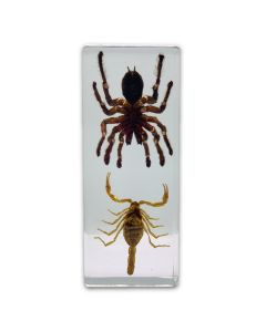 Real Tarantula and Scorpion Paperweight
