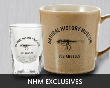 Shop NHM Exclusives